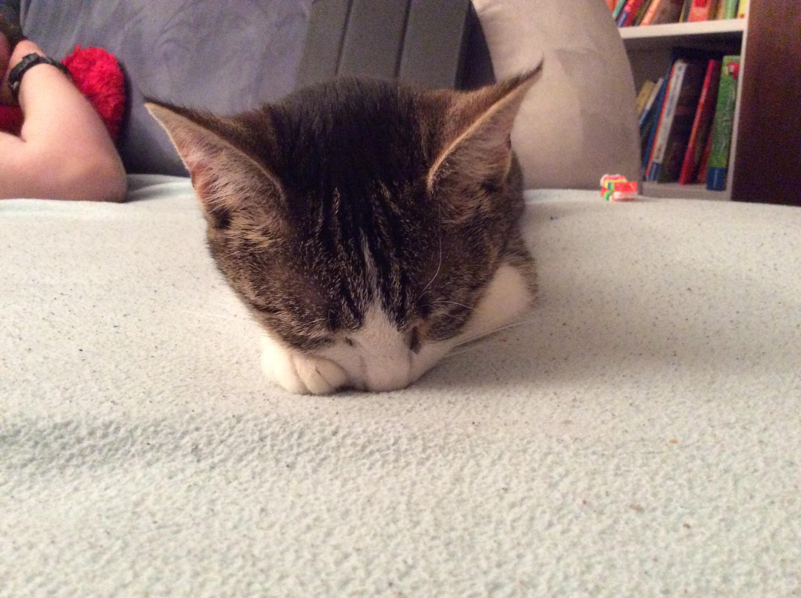sleeping cat schlafende Katze