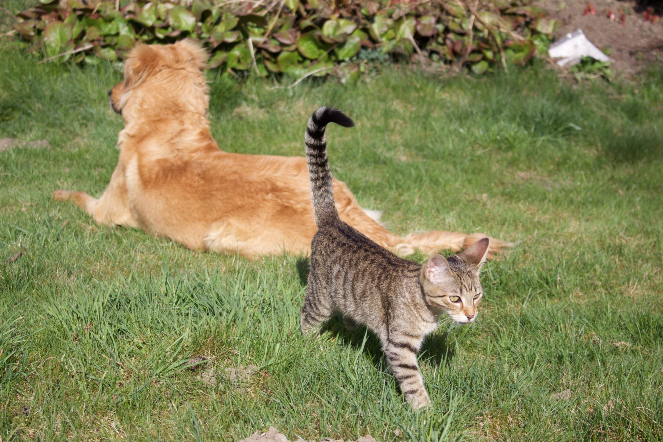 Hund Katze Garten