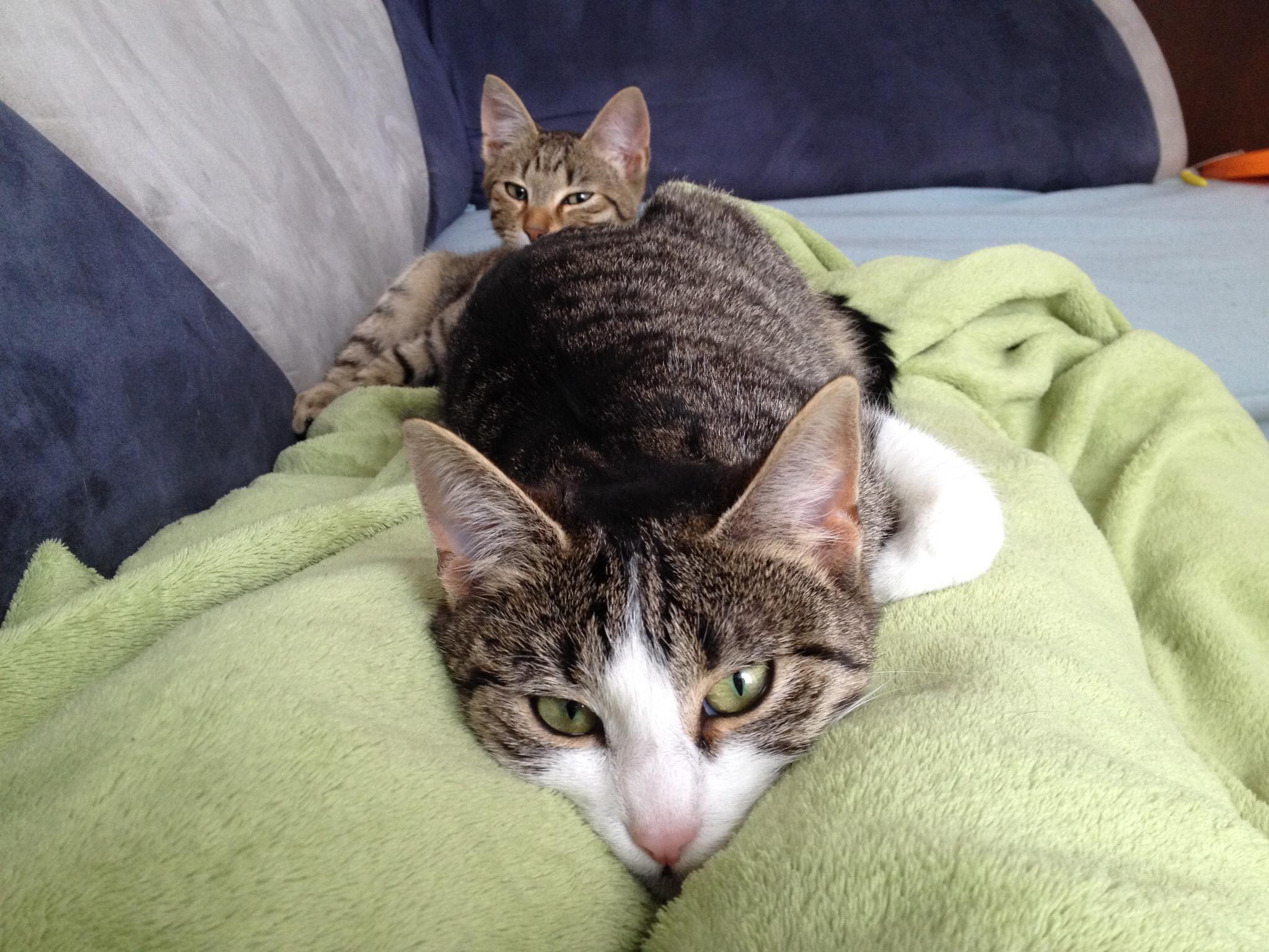 Katze Kuscheln