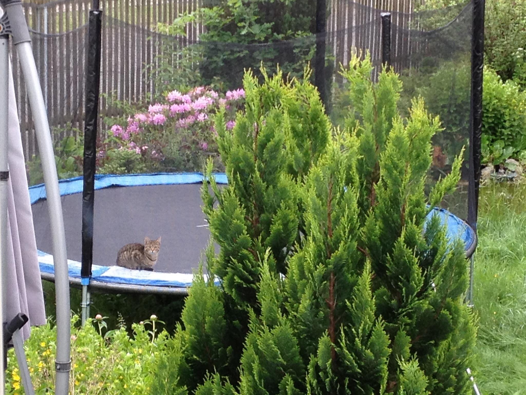 Katze auf Trampolin